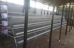 Chicken Cage Hot Sale In Kenya