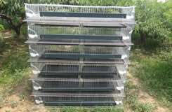 H Type,6 Tiers Quail Cage