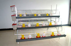 A Type Chick Cage