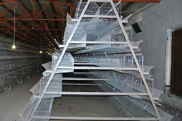 A Type, 5 Tiers, 200 Birds Chicken Cage