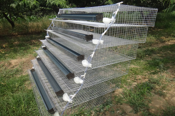 quails cage - photo #17