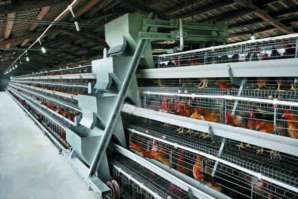 A Type Ladder Type Feeding Machine