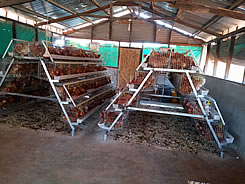 Design Layer Chicken Cages For Sale