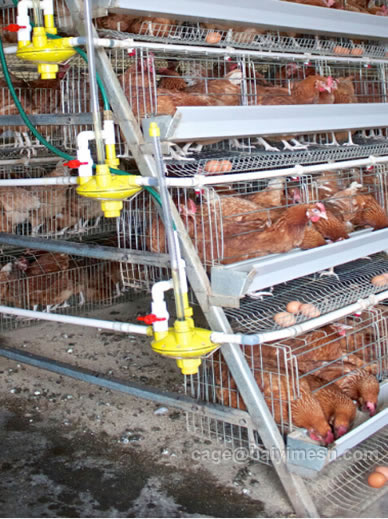 chicken layer cage price
