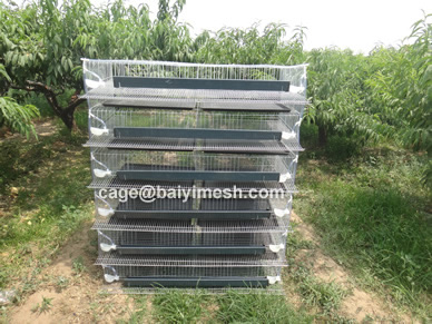 wire mesh quail cage supplier